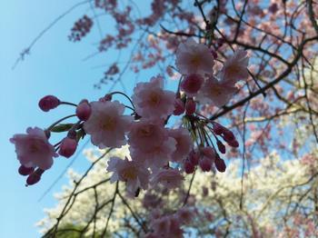 2012.04.08大寧寺4.JPG